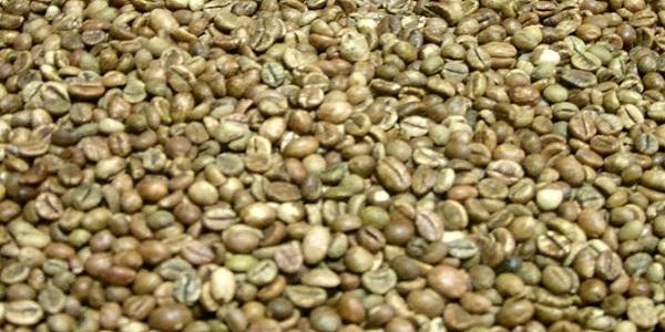 خرید دانه سبز قهوه در ایران