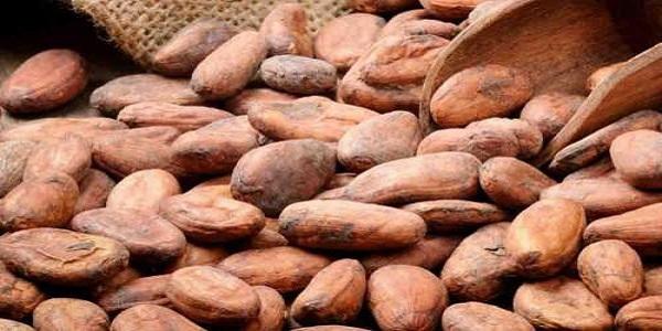 مرکز پخش بهترین پودر کاکائو خالص