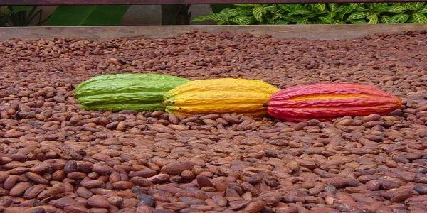 قیمت پودر کاکائو جی بی