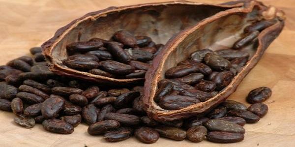 مرکز پخش انواع پودر کاکائو خارجی