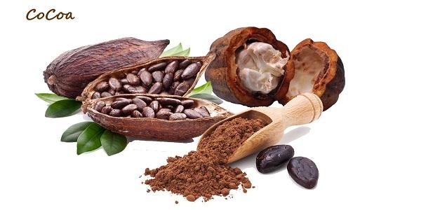 میوه درخت کاکائو