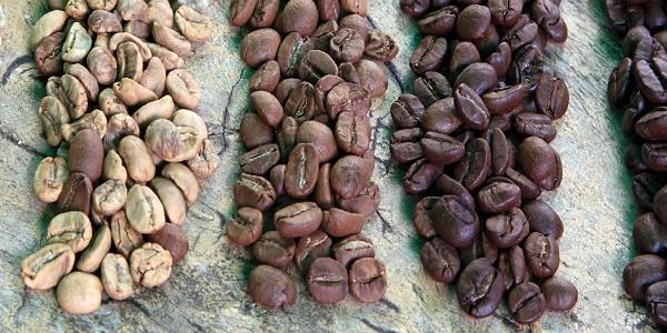 گوناگنی دانه قهوه برای فروش