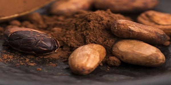 نماینده فروش پودر کاکائو اسپانیایی