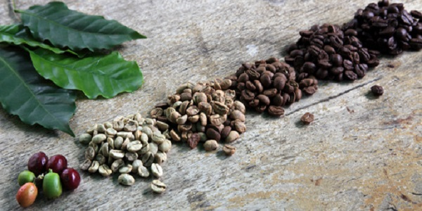 واردات دانه خام قهوه