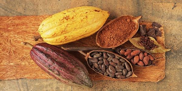 کاکائو اصل عمده