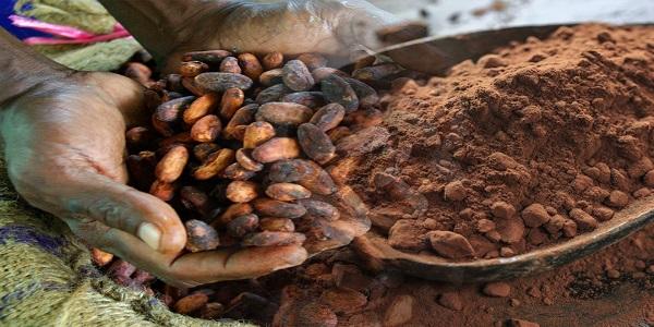 پودر کاکائو و انواع ان برای تولید