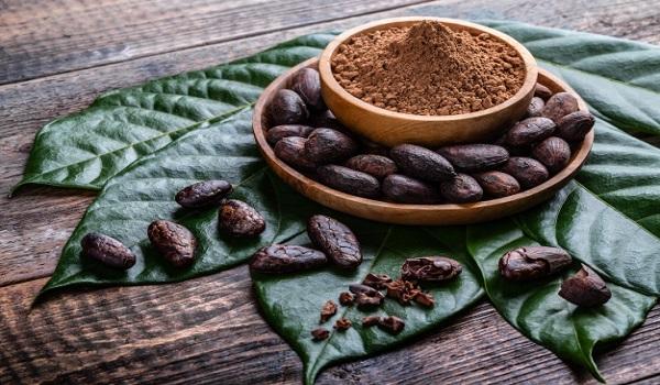 نمایندگی فروش پودر کاکائو اورجینال
